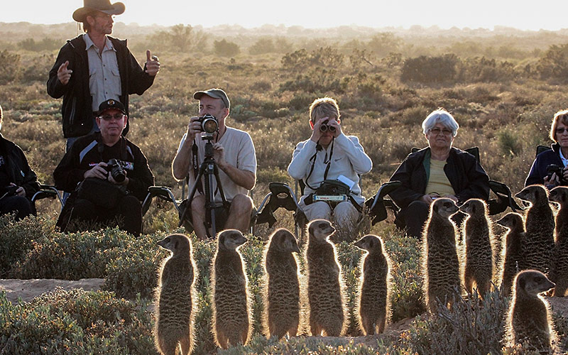 Meerkat Tours Oudtshoorn